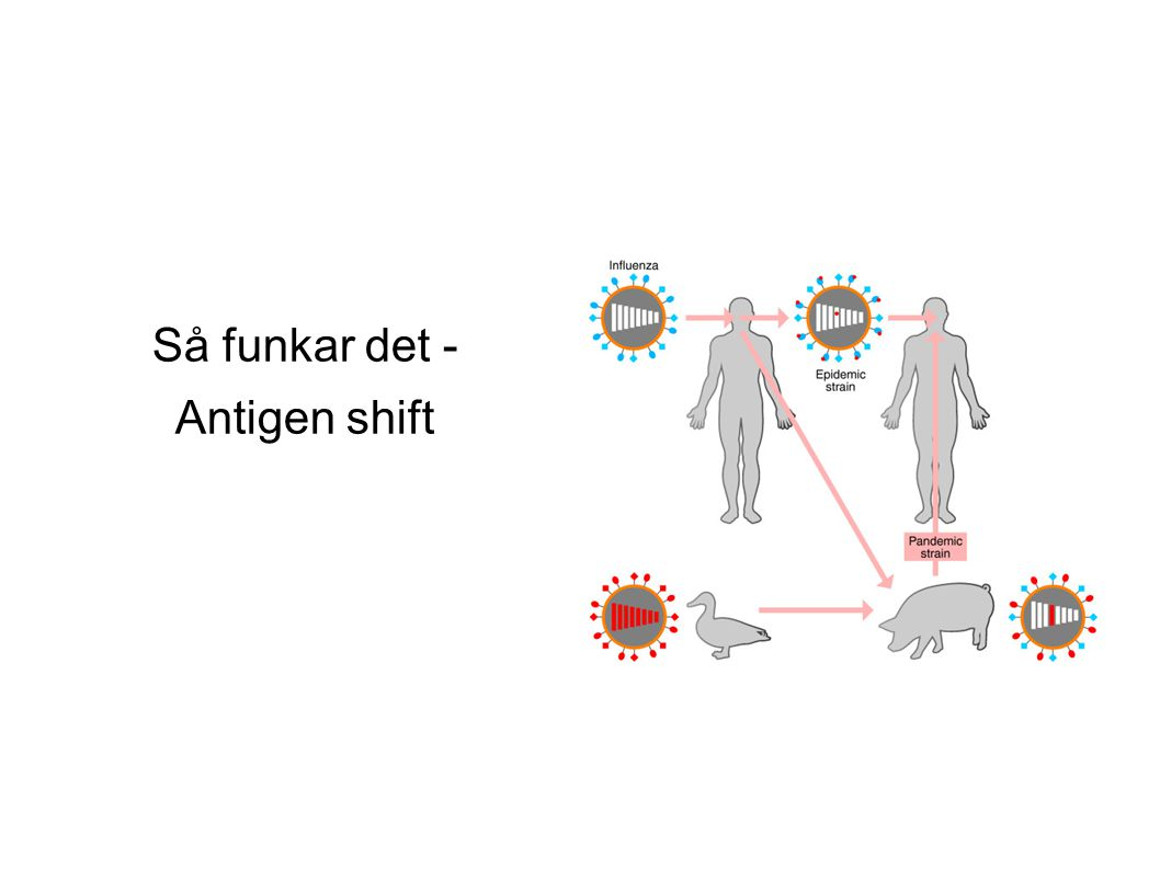 Så funkar det - Antigen shift