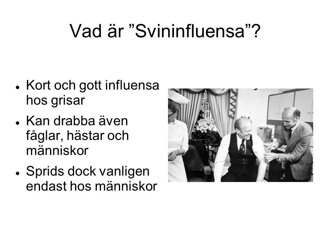 Vad är Svininfluensa .