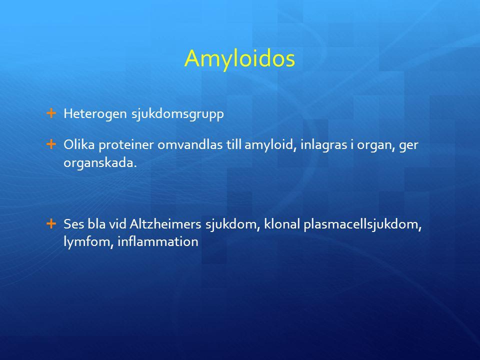 Amyloidos  Heterogen sjukdomsgrupp  Olika proteiner omvandlas till amyloid, inlagras i organ, ger organskada.