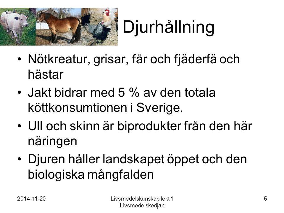2014-11-20Livsmedelskunskap lekt 1 Livsmedelskedjan 5 Djurhållning Nötkreatur, grisar, får och fjäderfä och hästar Jakt bidrar med 5 % av den totala köttkonsumtionen i Sverige.