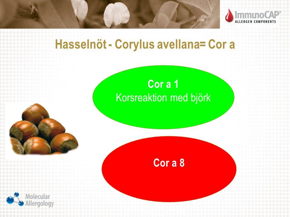 Hasselnöt - Corylus avellana= Cor a Cor a 1 Korsreaktion med björk Cor a 8