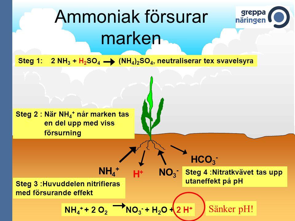 Ammoniak försurar marken Steg 1: 2 NH 3 + H 2 SO 4 (NH 4 ) 2 SO 4, neutraliserar tex svavelsyra NH 4 + H+H+ NO 3 - HCO 3 - NH 4 + + 2 O 2 NO 3 - + H 2 O + 2 H + Sänker pH.