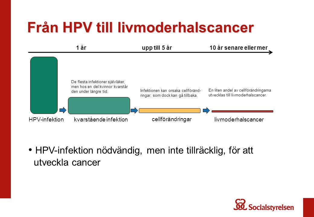 Från HPV till livmoderhalscancer 1 årupp till 5 år10 år senare eller mer HPV-infektion cellförändringar kvarstående infektionlivmoderhalscancer HPV-infektion nödvändig, men inte tillräcklig, för att utveckla cancer De flesta infektioner självläker, men hos en del kvinnor kvarstår den under längre tid.