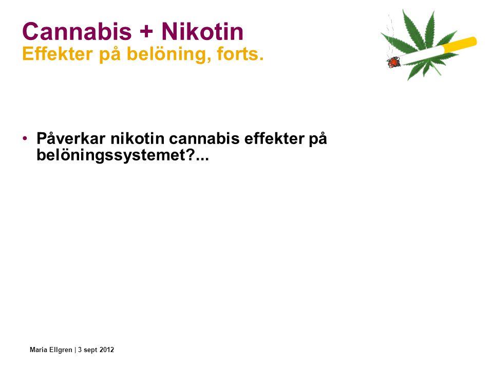 Cannabis + Nikotin Påverkar nikotin cannabis effekter på belöningssystemet?... Effekter på belöning, forts. Maria Ellgren | 3 sept 2012