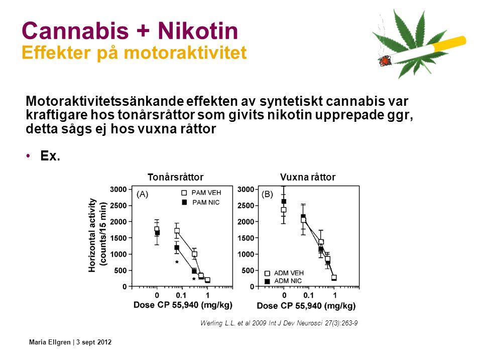 Cannabis + Nikotin Motoraktivitetssänkande effekten av syntetiskt cannabis var kraftigare hos tonårsråttor som givits nikotin upprepade ggr, detta såg
