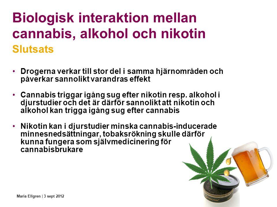 Biologisk interaktion mellan cannabis, alkohol och nikotin Drogerna verkar till stor del i samma hjärnområden och påverkar sannolikt varandras effekt