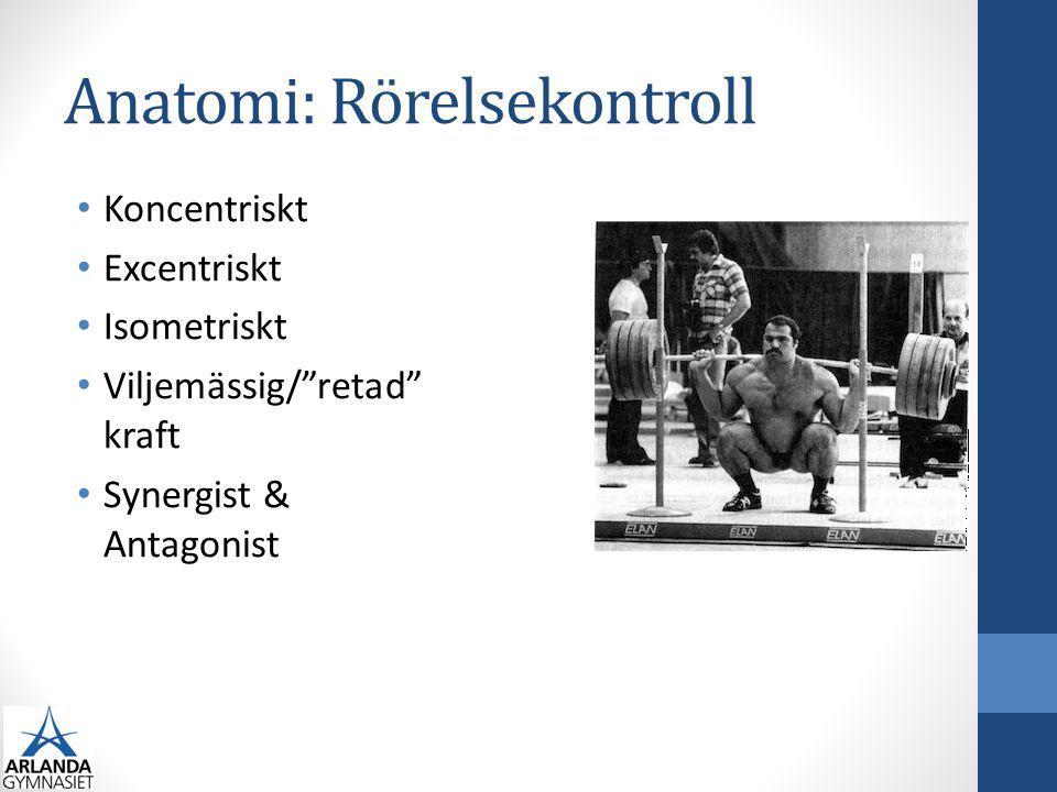 "Anatomi: Rörelsekontroll Koncentriskt Excentriskt Isometriskt Viljemässig/""retad"" kraft Synergist & Antagonist"