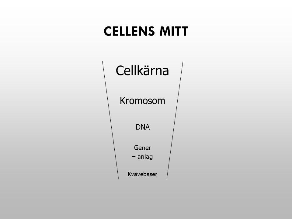 STAMCELLER DE CELLER SOM BILDAS DIREKT EFTER BEFRUKTNINGEN KALLAS STAMCELLER.