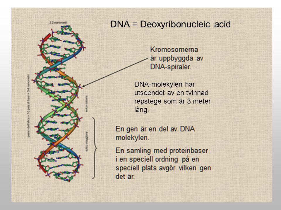 DNA-molekylen har utseendet av en tvinnad repstege som är 3 meter lång. DNA = Deoxyribonucleic acid