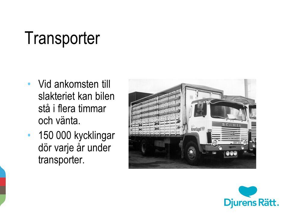 Transporter Vid ankomsten till slakteriet kan bilen stå i flera timmar och vänta. 150 000 kycklingar dör varje år under transporter. 2014-11-20 Per-An