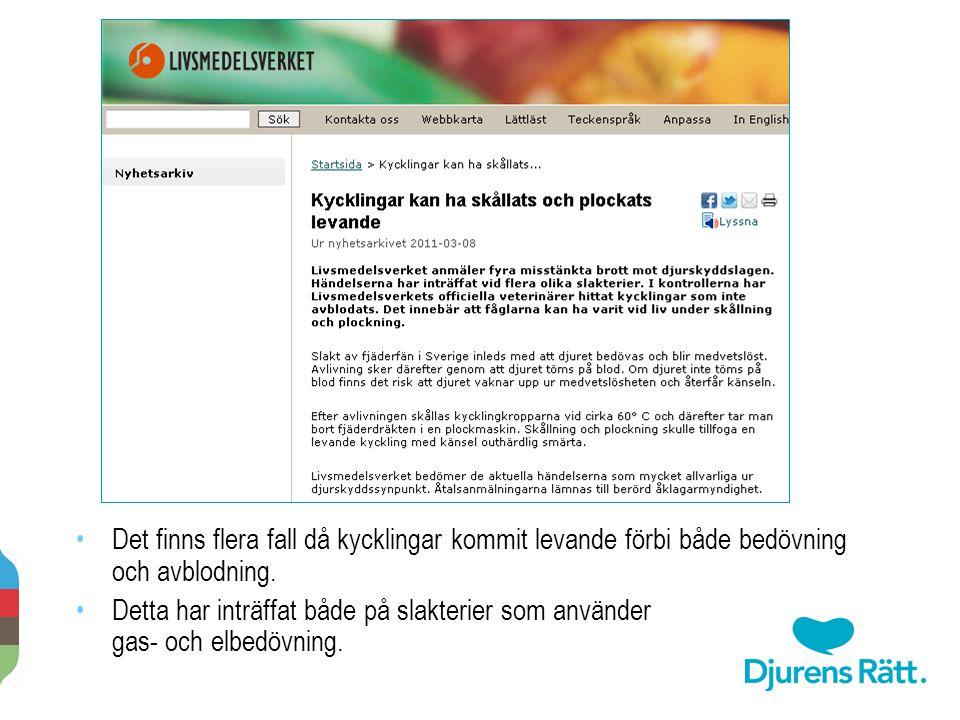 2014-11-20 Per-Anders Svärd · Djurens rätt · www.djurensratt.se 24 Det finns flera fall då kycklingar kommit levande förbi både bedövning och avblodni