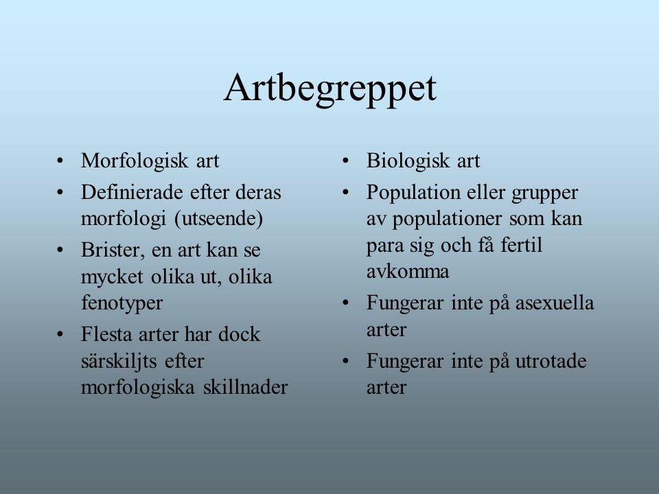 Artbegreppet Morfologisk art Definierade efter deras morfologi (utseende) Brister, en art kan se mycket olika ut, olika fenotyper Flesta arter har doc