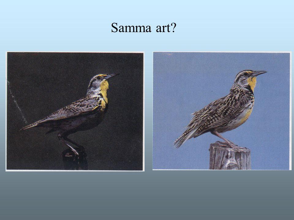 Samma art?