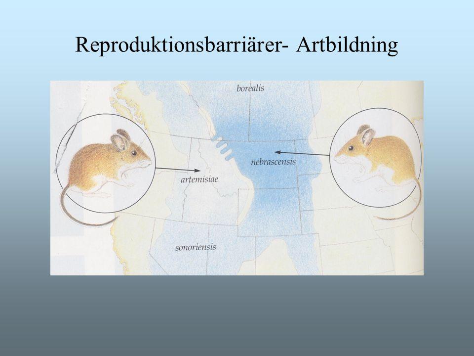 Reproduktionsbarriärer- Artbildning