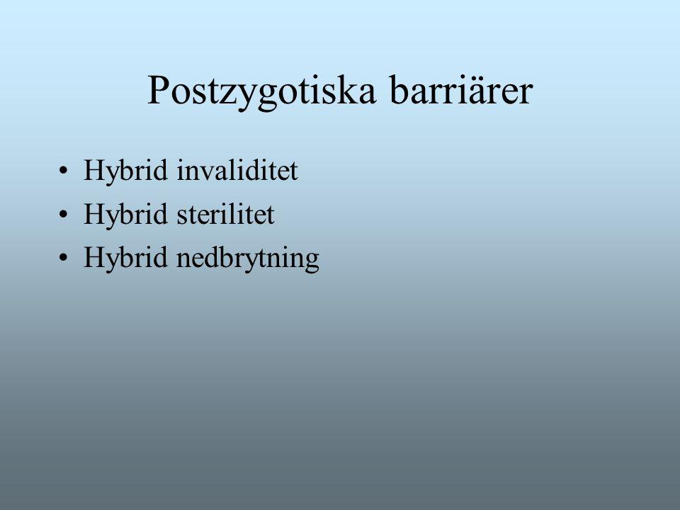 Postzygotiska barriärer Hybrid invaliditet Hybrid sterilitet Hybrid nedbrytning