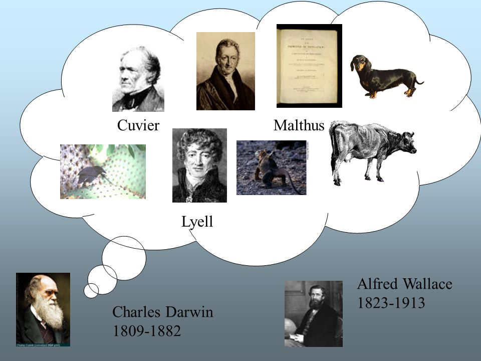 Idéhistoria Cuvier Lyell Malthus Charles Darwin 1809-1882 Alfred Wallace 1823-1913