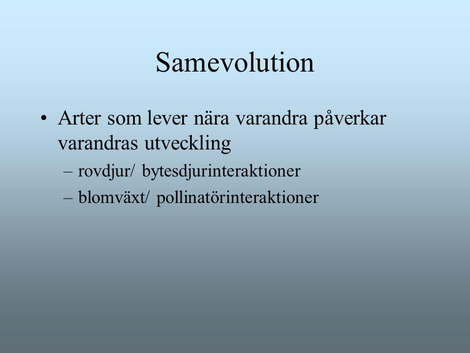 Samevolution Arter som lever nära varandra påverkar varandras utveckling –rovdjur/ bytesdjurinteraktioner –blomväxt/ pollinatörinteraktioner