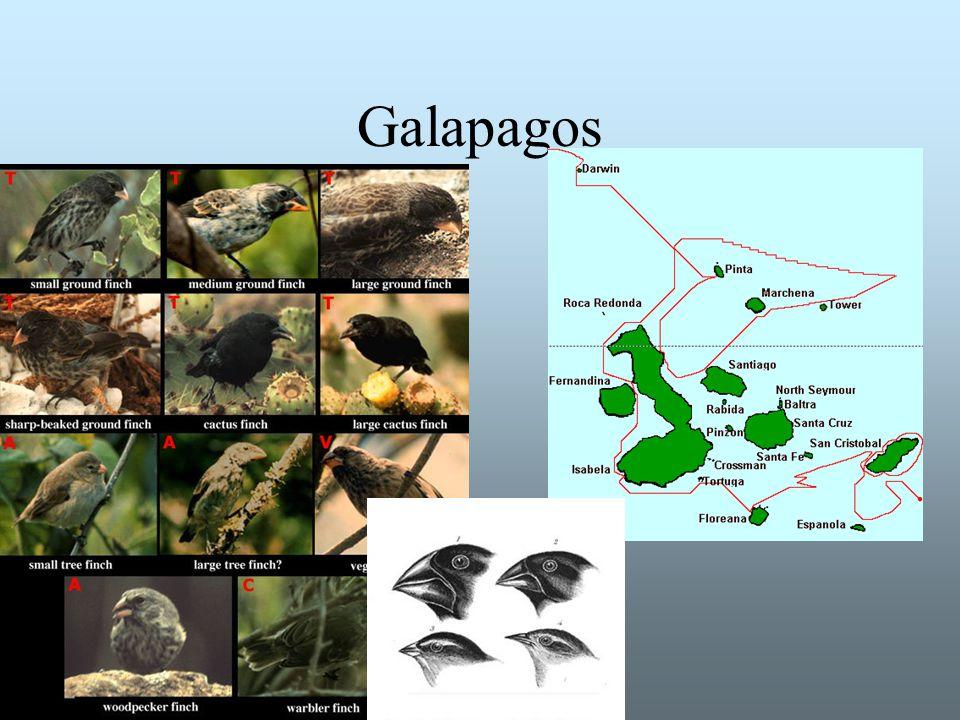Det har funnits fler arter Idag finns troligen mellan 5 och 50 miljoner arter Det motsvarar cirka 1 % av de arter som har levat i historisk tid Många utdöda arter representerar former av organismer som ligger mellan de arter som lever idag (mellanformer)