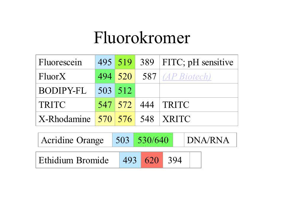 Fluorokromer Fluorescein495519389FITC; pH sensitive FluorX494520 587(AP Biotech) BODIPY-FL503512 TRITC547572444TRITC X-Rhodamine570576548XRITC Acridin