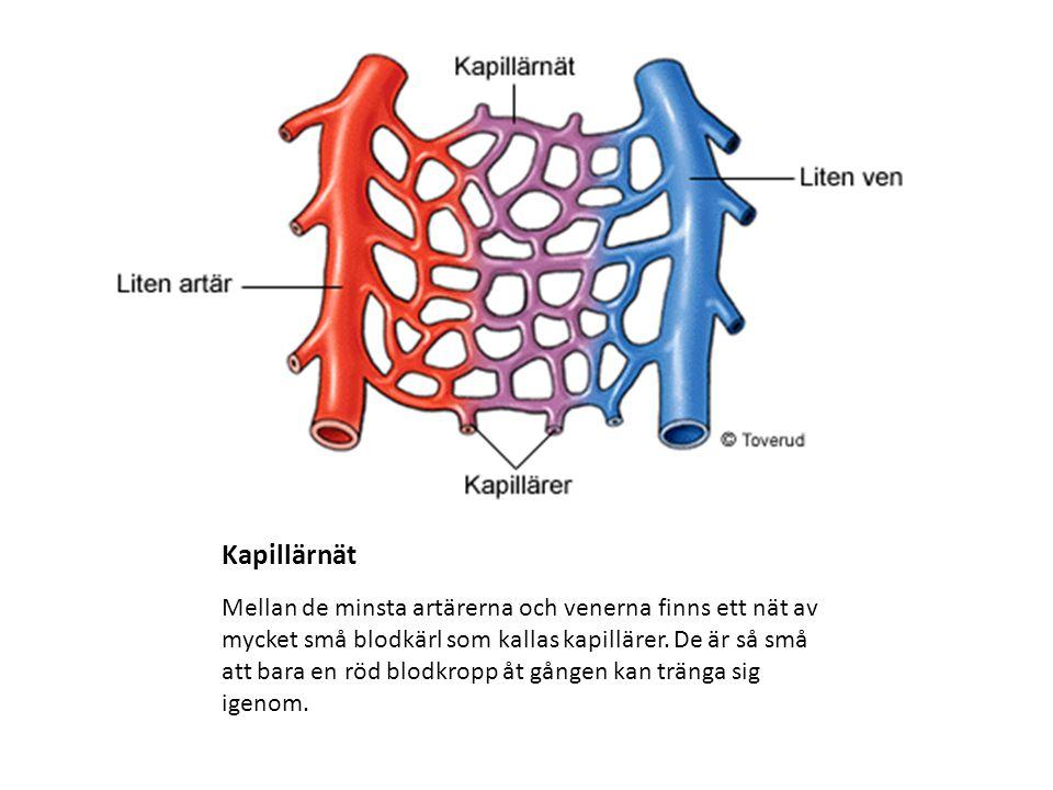 Kapillärnät Mellan de minsta artärerna och venerna finns ett nät av mycket små blodkärl som kallas kapillärer. De är så små att bara en röd blodkropp