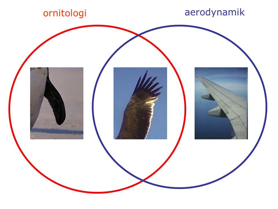 ornitologi aerodynamik