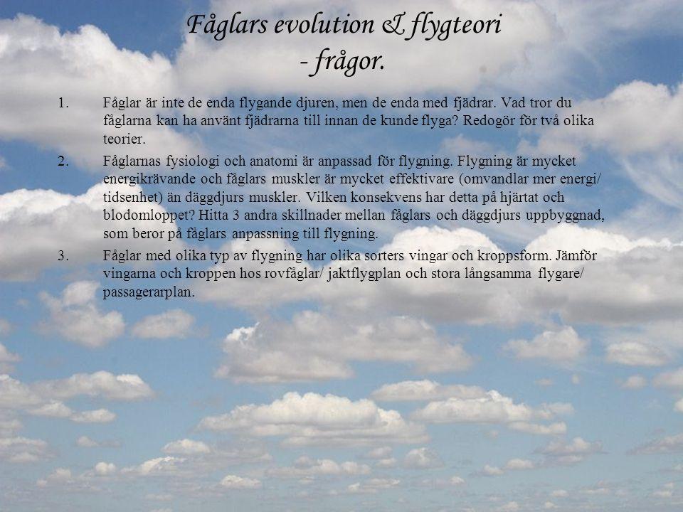 Fåglars evolution & flygteori - frågor. 1.Fåglar är inte de enda flygande djuren, men de enda med fjädrar. Vad tror du fåglarna kan ha använt fjädrarn