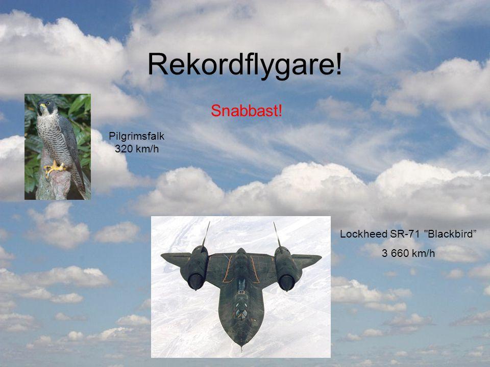 Rekordflygare! Snabbast! Pilgrimsfalk 320 km/h Lockheed SR-71 Blackbird 3 660 km/h