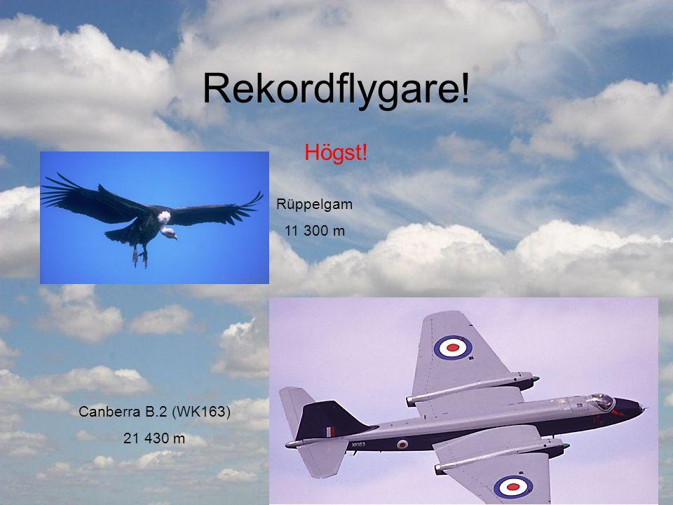 Rekordflygare! Högst! Canberra B.2 (WK163) 21 430 m Rüppelgam 11 300 m
