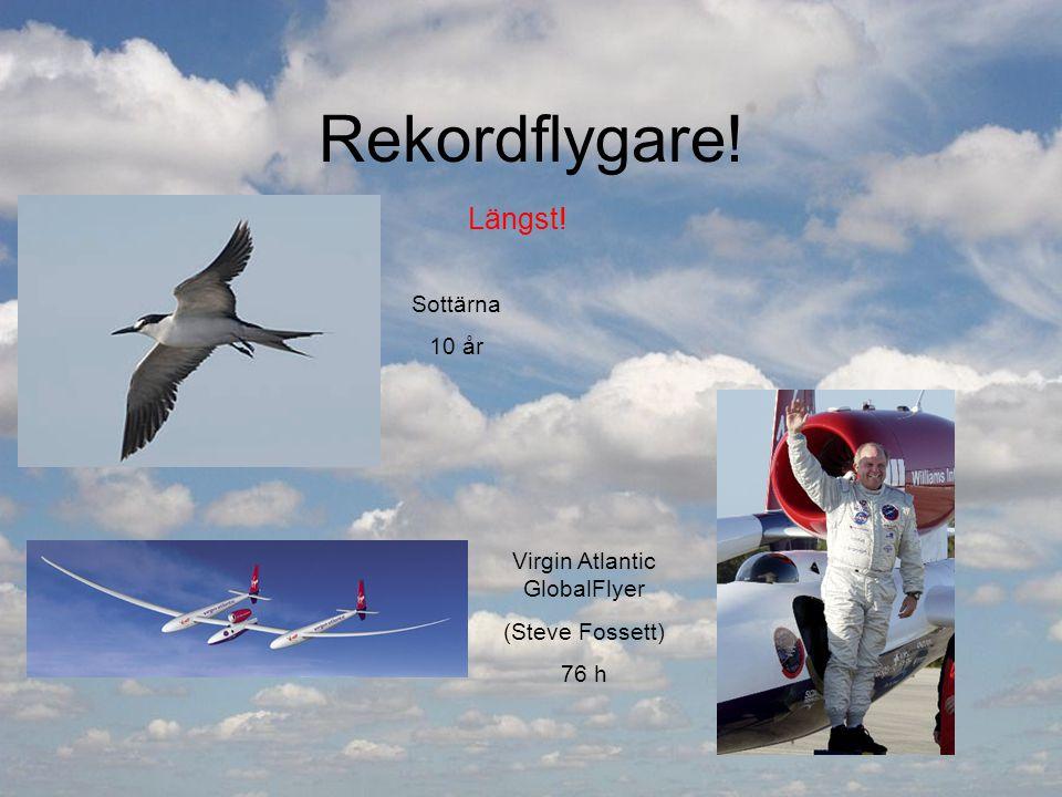 Rekordflygare! Längst! Sottärna 10 år Virgin Atlantic GlobalFlyer (Steve Fossett) 76 h