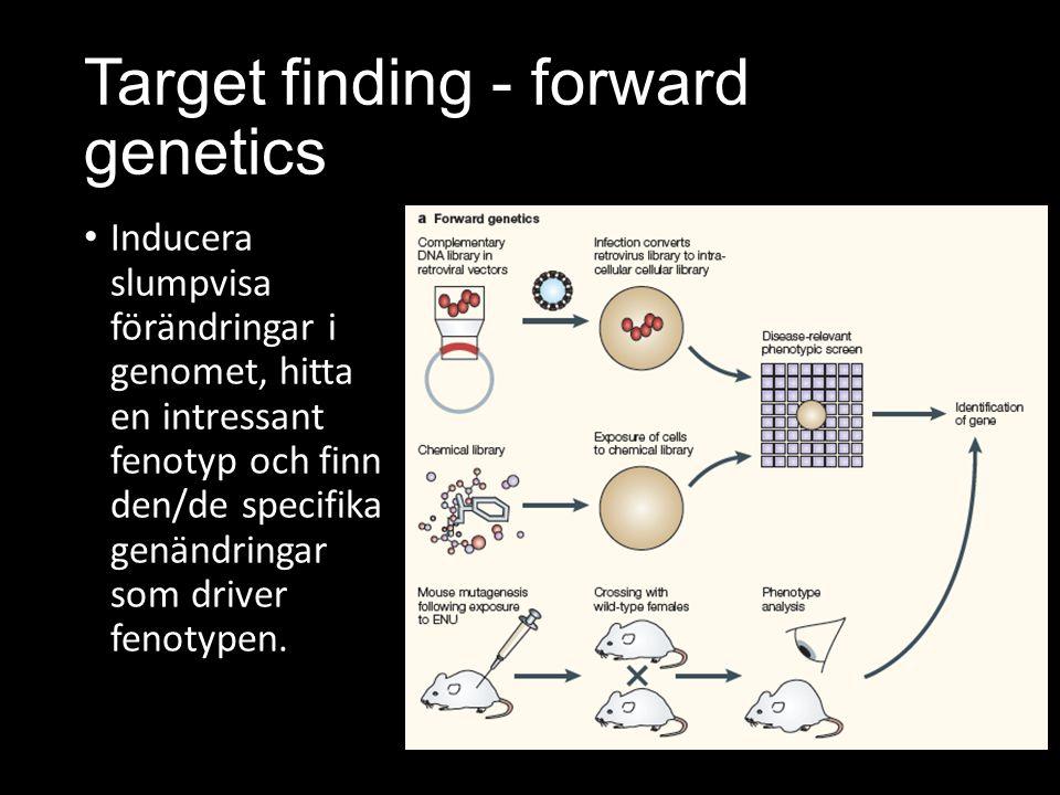 Target finding - forward genetics Inducera slumpvisa förändringar i genomet, hitta en intressant fenotyp och finn den/de specifika genändringar som driver fenotypen.