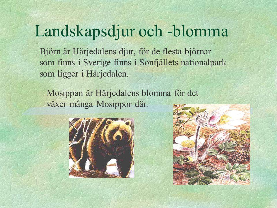 Landskapsdjur och -blomma Björn är Härjedalens djur, för de flesta björnar som finns i Sverige finns i Sonfjällets nationalpark som ligger i Härjedale