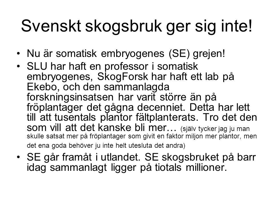 Svenskt skogsbruk ger sig inte! Nu är somatisk embryogenes (SE) grejen! SLU har haft en professor i somatisk embryogenes, SkogForsk har haft ett lab p