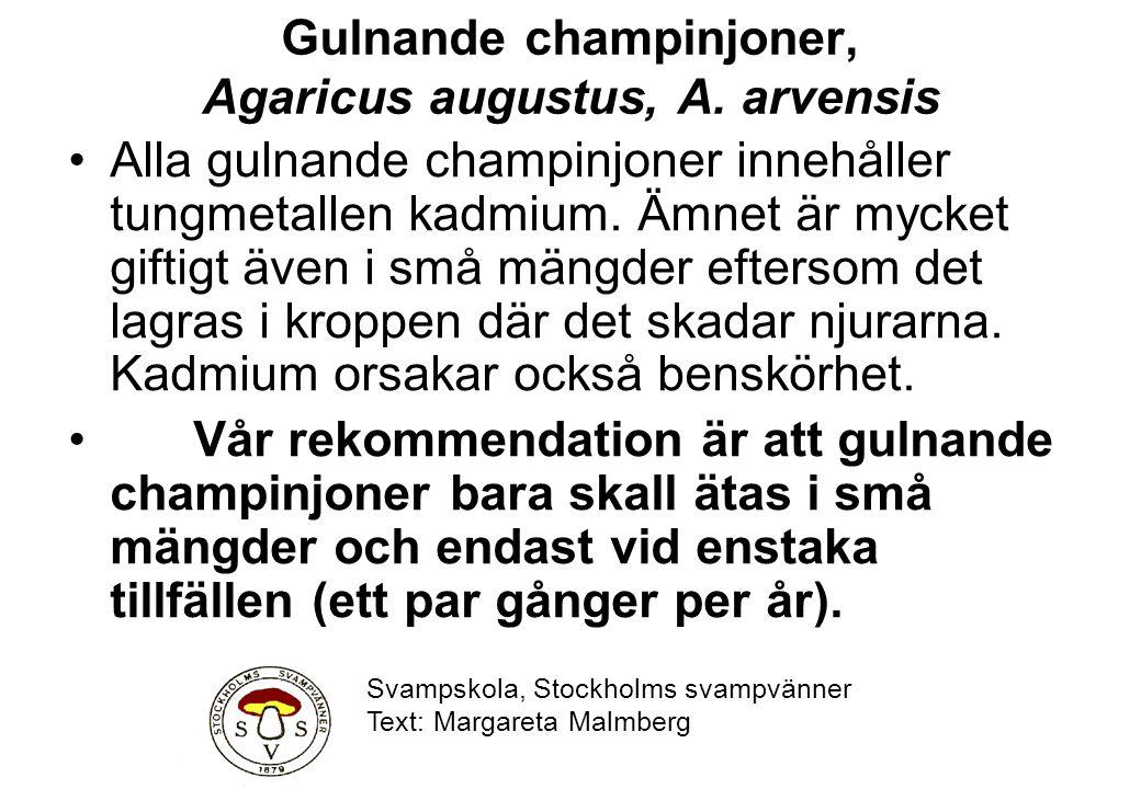 Gulnande champinjoner, Agaricus augustus, A. arvensis Alla gulnande champinjoner innehåller tungmetallen kadmium. Ämnet är mycket giftigt även i små m