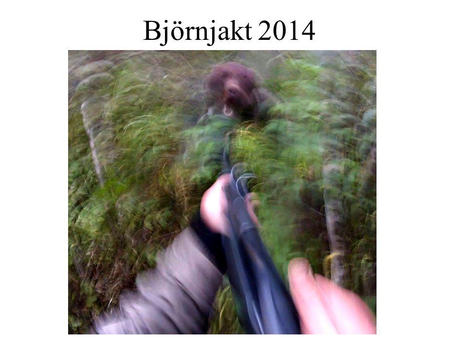 Björnjakt 2014