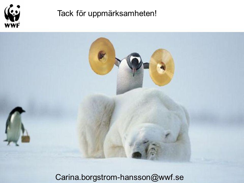 Carina.borgstrom-hansson@wwf.se Tack för uppmärksamheten!