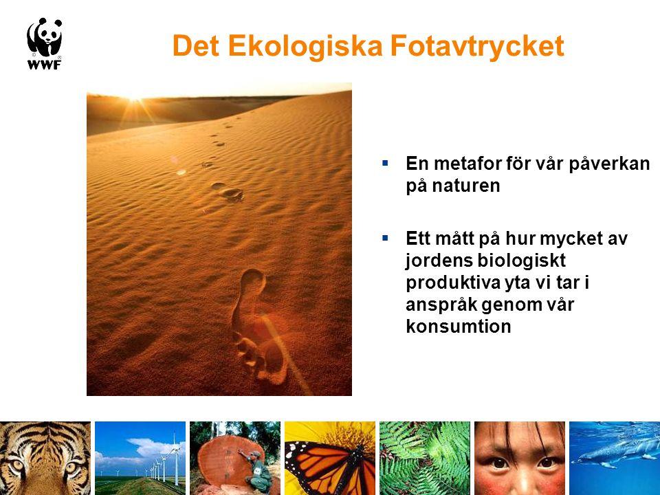 Det Ekologiska Fotavtrycket  En metafor för vår påverkan på naturen  Ett mått på hur mycket av jordens biologiskt produktiva yta vi tar i anspråk ge