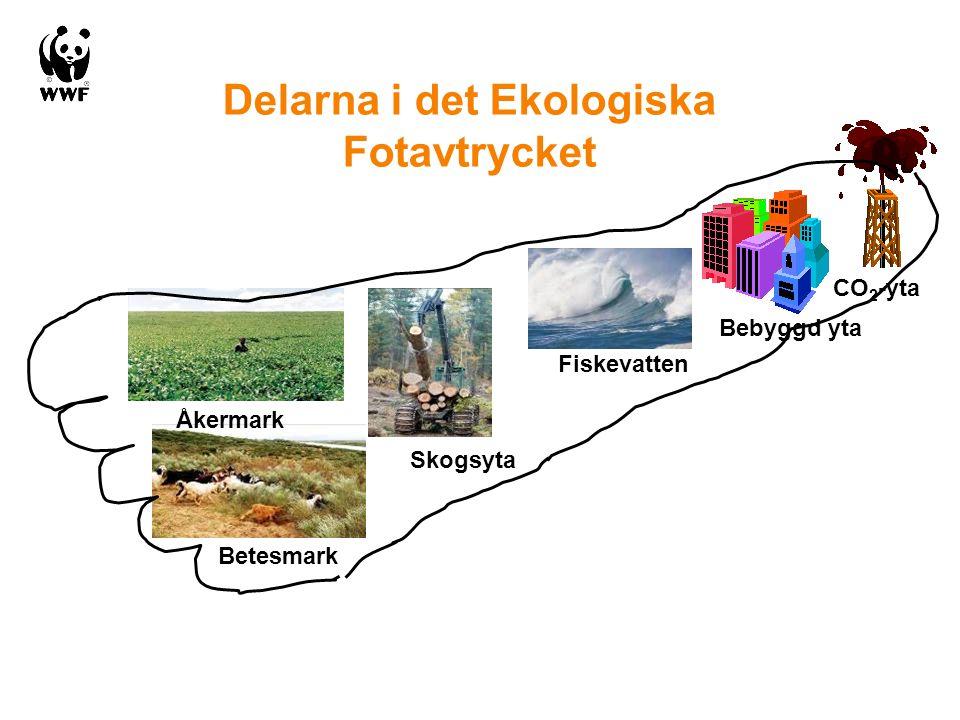 Delarna i det Ekologiska Fotavtrycket Bebyggd yta CO 2 -yta Betesmark Skogsyta Åkermark Fiskevatten