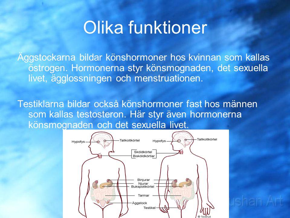 Olika funktioner Äggstockarna bildar könshormoner hos kvinnan som kallas östrogen. Hormonerna styr könsmognaden, det sexuella livet, ägglossningen och