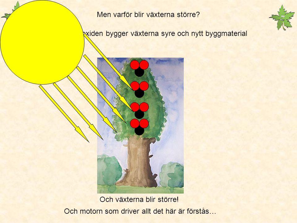 Fotosyntesen Är därför världens viktigaste kemiska process Utan den skulle det inte finnas syre på jorden i den form som vi andas in.