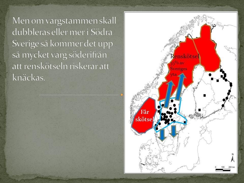Renskötsel 55% av Sveriges yta Får skötsel