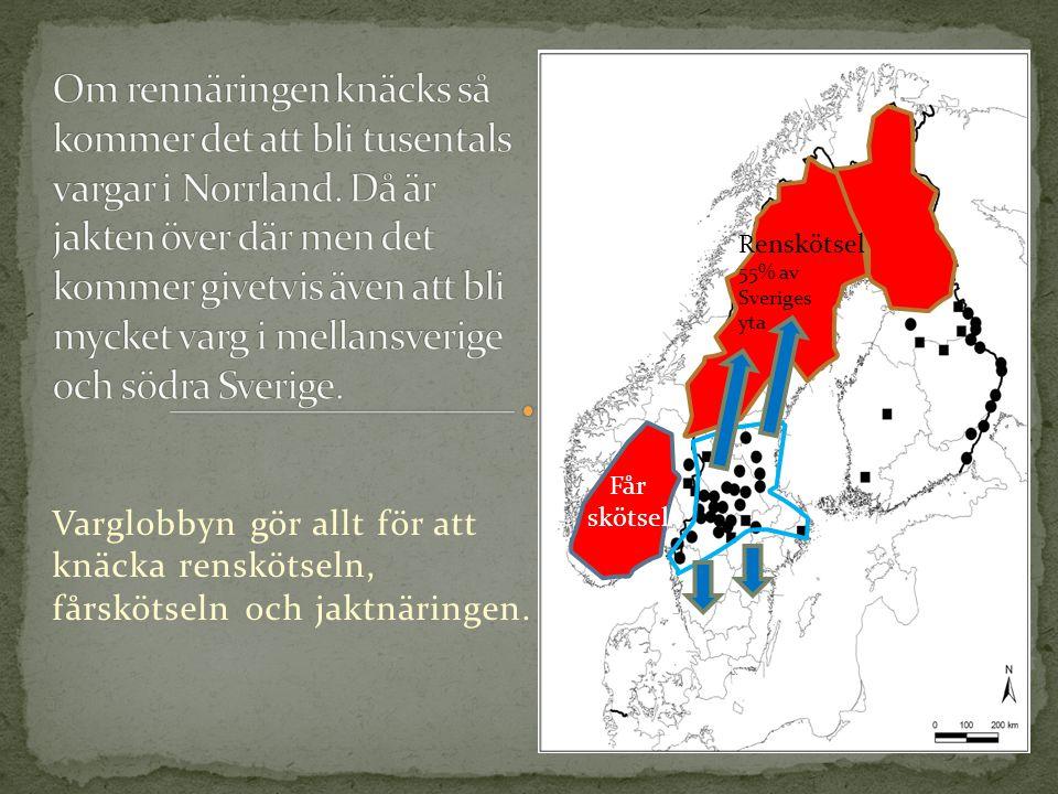 Renskötsel 55% av Sveriges yta Får skötsel Varglobbyn gör allt för att knäcka renskötseln, fårskötseln och jaktnäringen.