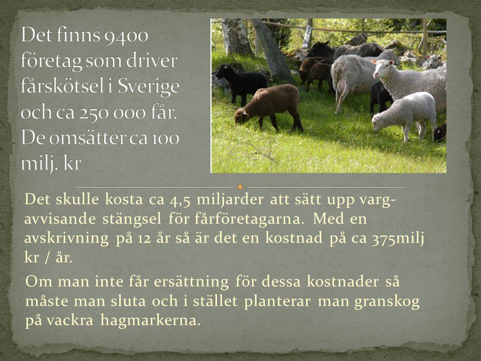 Det skulle kosta ca 4,5 miljarder att sätt upp varg- avvisande stängsel för fårföretagarna.