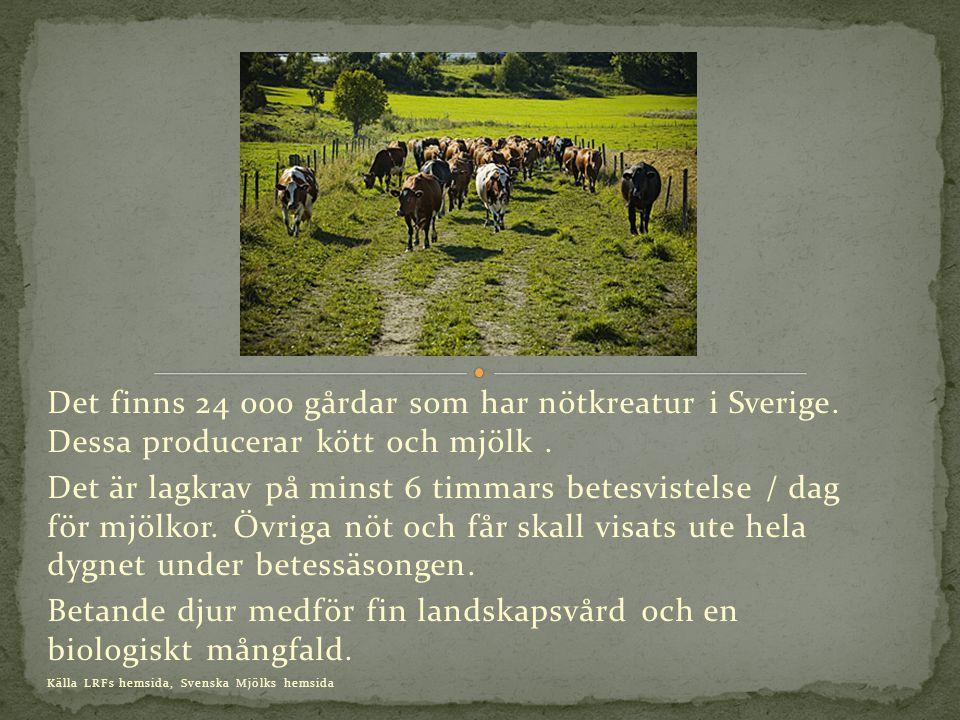 Det finns 24 000 gårdar som har nötkreatur i Sverige.