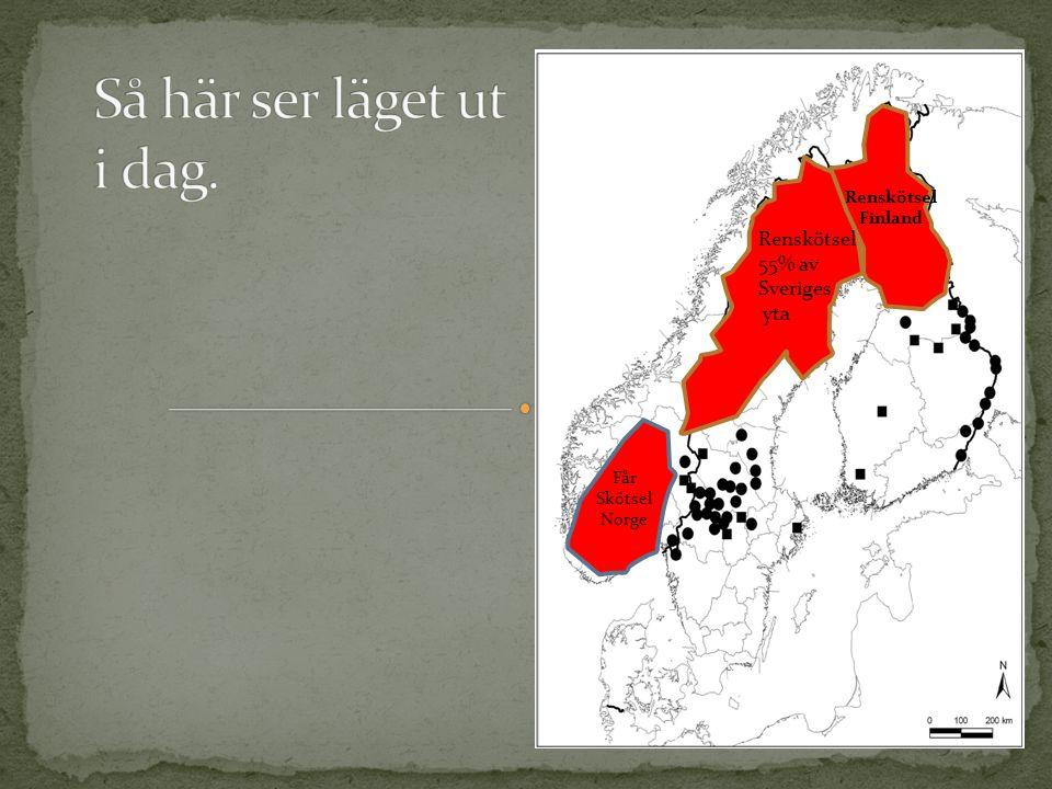 Renskötsel Finland Renskötsel 55% av Sveriges yta Får Skötsel Norge