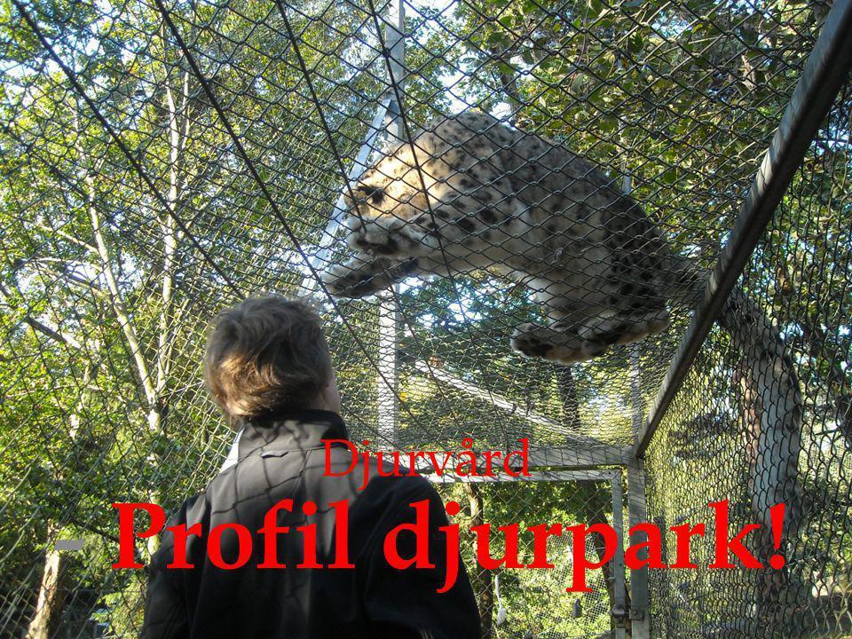 Djurvård - Profil djurpark!