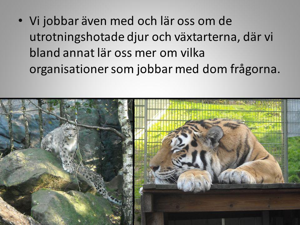 Vi jobbar även med och lär oss om de utrotningshotade djur och växtarterna, där vi bland annat lär oss mer om vilka organisationer som jobbar med dom