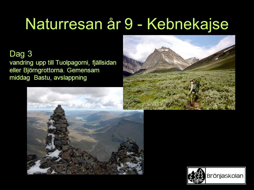 Naturresan år 9 - Kebnekajse Dag 3 vandring upp till Tuolpagorni, fjällsidan eller Björngrottorna. Gemensam middag Bastu, avslappning