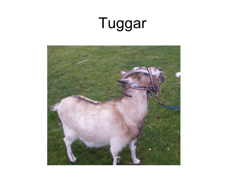 Tuggar