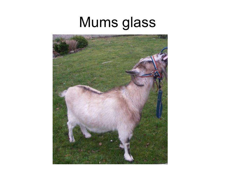 Mums glass