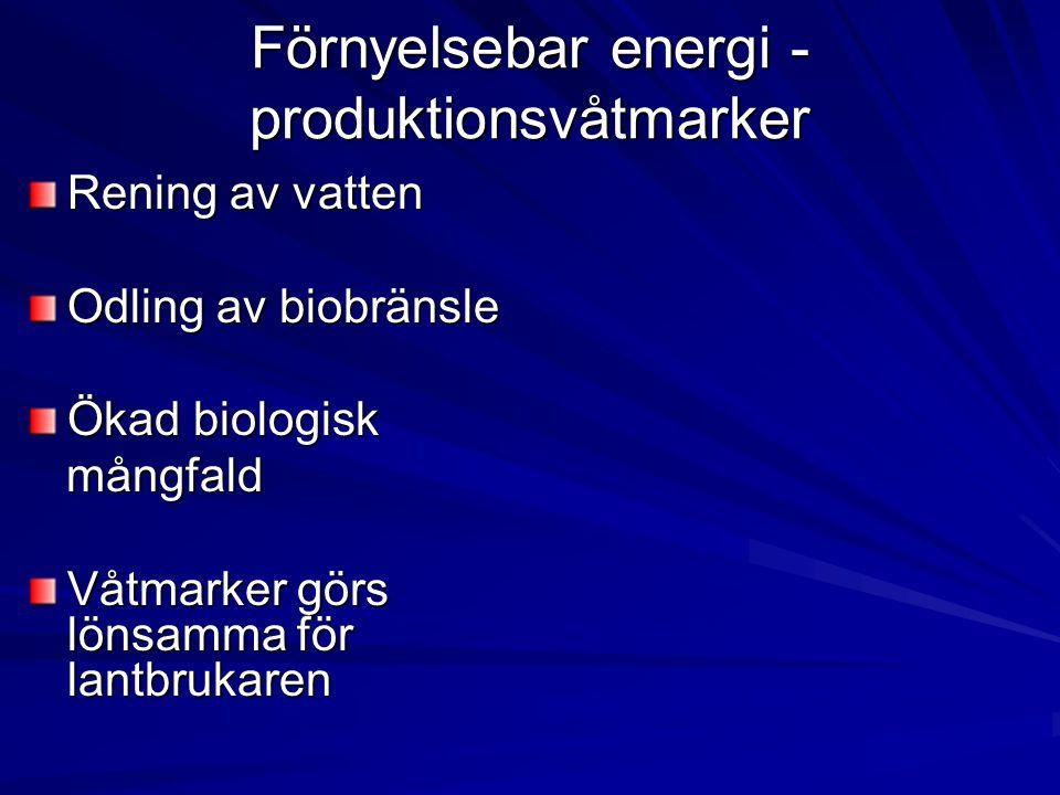 Förnyelsebar energi - produktionsvåtmarker Rening av vatten Odling av biobränsle Ökad biologisk mångfald mångfald Våtmarker görs lönsamma för lantbruk